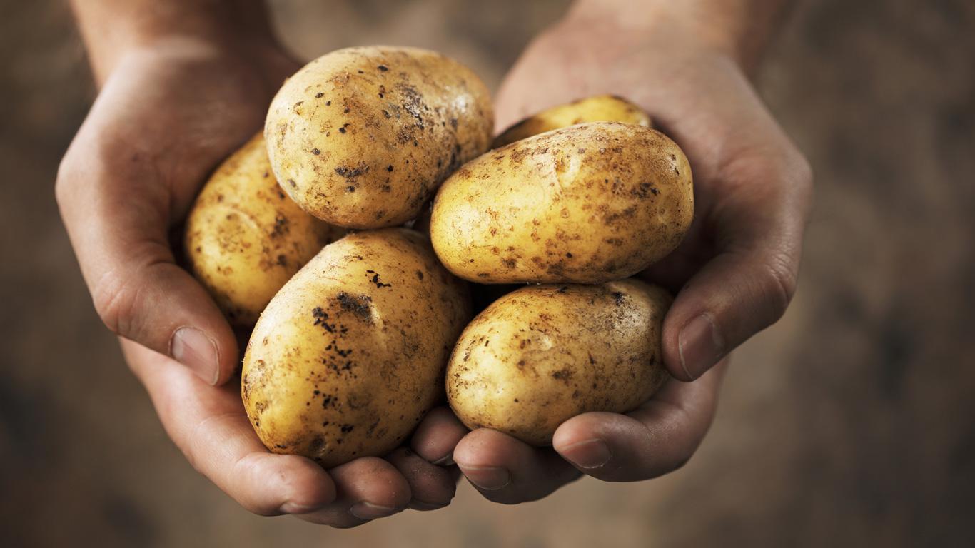 Kartoffeln gut aussortieren