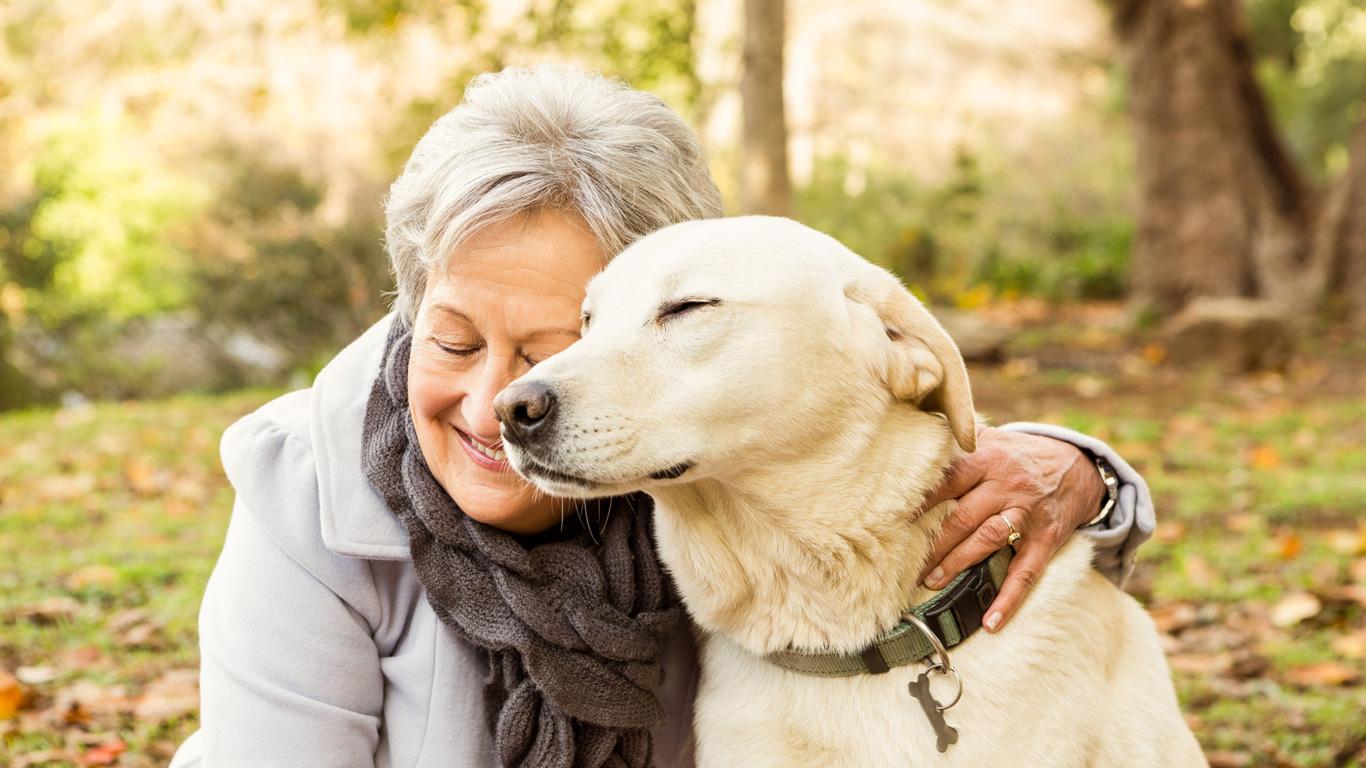 Hunde altern wie Menschen